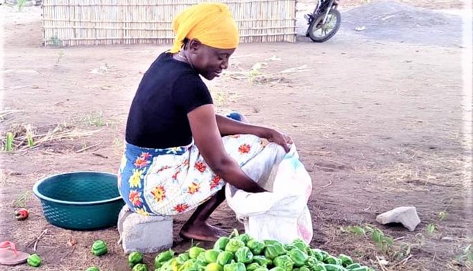 COSECHANDO AGUA EN MOZAMBIQUE