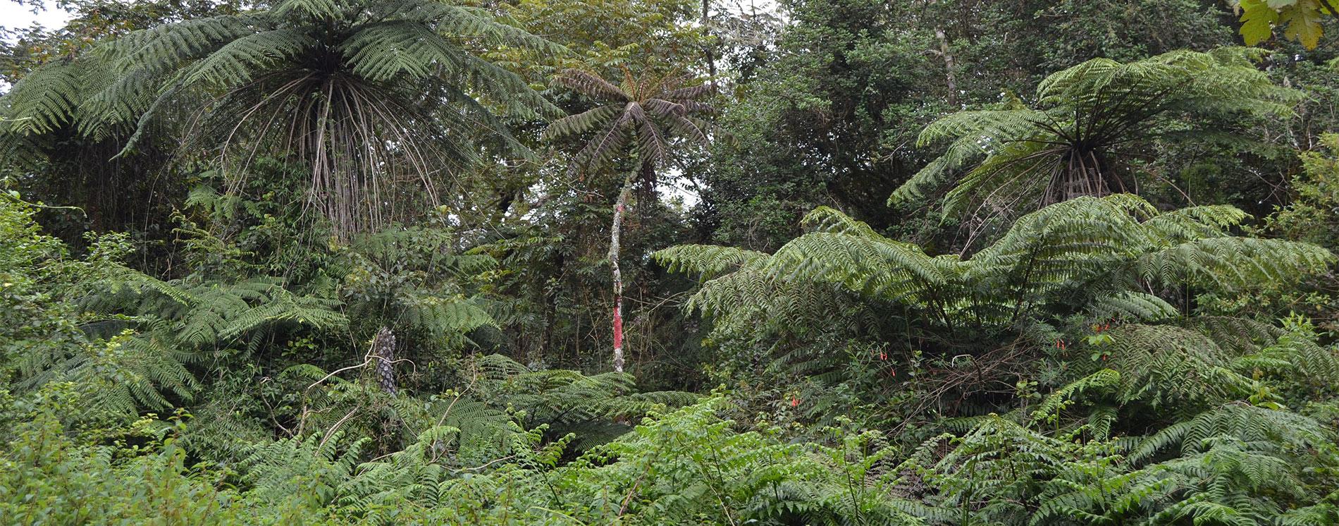 Flora de la Biosfera Transfronteriza