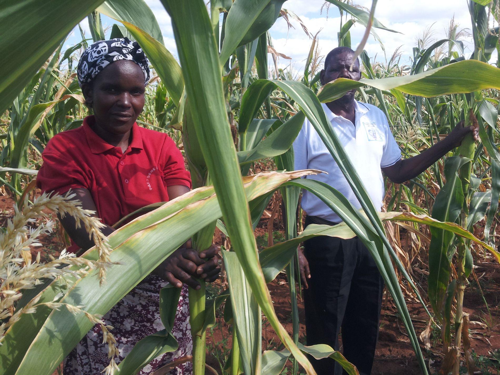 Proyecto para la mejora nutricional en Mozambique