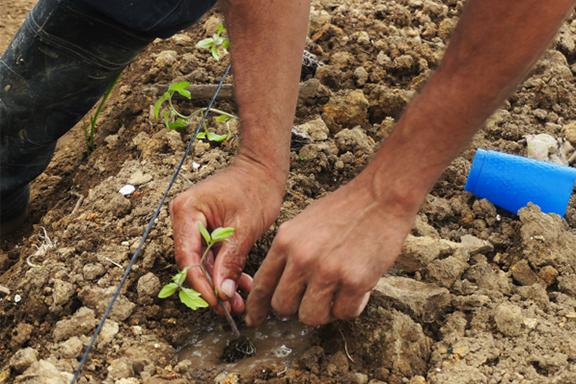 Ensayos de cultivo de Chia y Soya