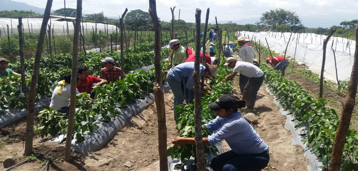 Escuelas de Campo_Honduras_2018