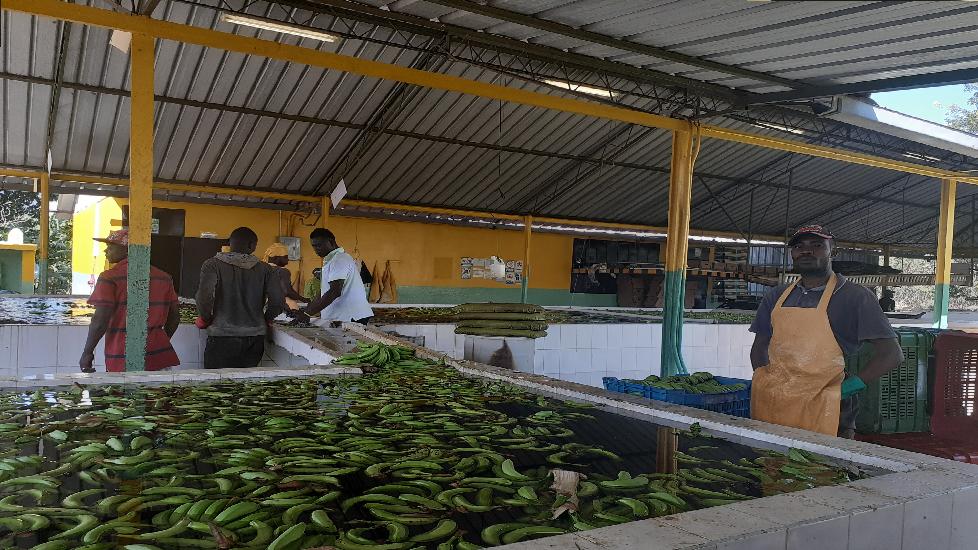 Trabajo con comunidades bananeras