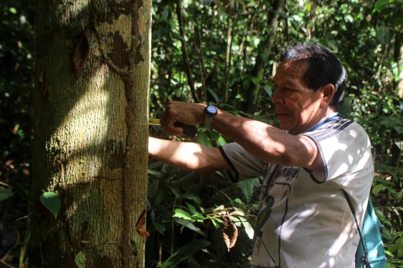 inventarios forestales ucayali