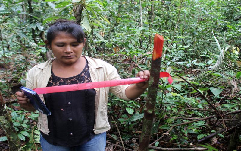 inventario forestal mujer atalaya ucayali