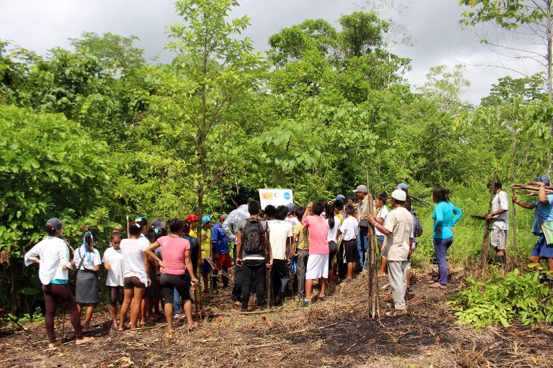 selva gobernanza ambiental ucayali