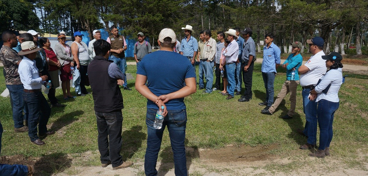 Gira de experiencias en cultivo de aguacate hass_occidente_Honduras_2018