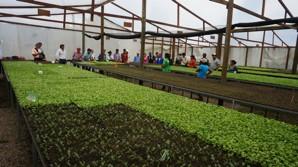 Capacitación a 27 productores en occidente de Honduras_2018