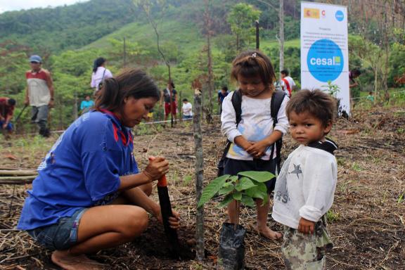 mujeres selva reforestación