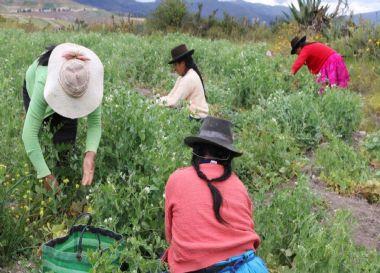 desarrollo económico con poblaciones de dos mancomunidades de la cuenca media del río Pachachaca