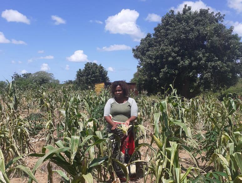 AGRICULTORAS CON UN NUEVO HORIZONTE DE TRABAJO EN MOZAMBIQUE